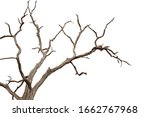 Dry Branchs Of Dead Tree With...