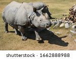Amazing Two Horned Rhinoceros...