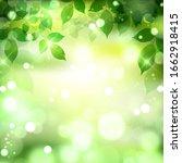 fresh green leaves light... | Shutterstock . vector #1662918415