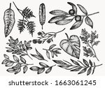 botanical vintage plants and... | Shutterstock .eps vector #1663061245