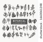 botanical vintage plants and... | Shutterstock .eps vector #1663061248