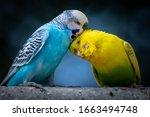 Portrait Of Two Cute Cuddling...
