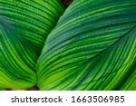 Foliage Of Tropical Forest Lea...