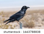 Crow Perched On Fence Post In...