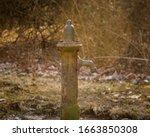 Water spigot found at the...