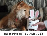 Dog Sniffing Bunny Box With...