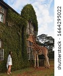 Small photo of beautiful couple on a honeymoon in africa in a hotel giraffe manor breakfast with giraffes luxury holiday
