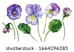Watercolor Floral Collection Of ...