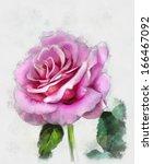 Beautiful Rose  Watercolor...