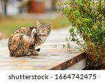 A Brown Tabby Cat Sits Sadly On ...