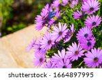 Beautiful Flowering Bush Of...