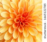 Beautiful Dahlia Flowers In...