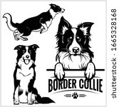 border collie dog   vector set... | Shutterstock .eps vector #1665328168