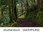Dark Forest Road. Deep Dark...