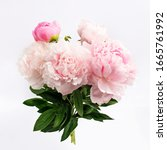 Colorful Peonies On White In...