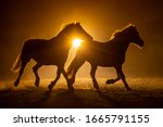 Silhouette Of Two Galloping...