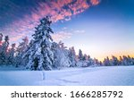 Winter Nature Forest Sunset...