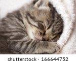Stock photo  weeks sleeping baby kitten 166644752