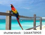 Macaw On Baru Island Perched O...