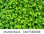 Floral Background   Small Gree...