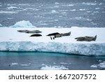 Antarctica  Antarctic Peninsul...