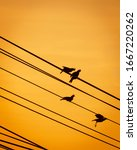 Silhouette Of Birds In The...