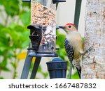 Red Headed Woodpecker On Tree