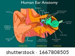 ear anatomy of the outer ... | Shutterstock .eps vector #1667808505