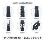 damaged hair surface under... | Shutterstock .eps vector #1667814715