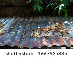 Rusty Zinc Roof And Some Of Dry ...