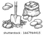 potato sketch  planting or... | Shutterstock .eps vector #1667964415