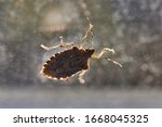 Small photo of Stink bug on a window glass surface in sunlight
