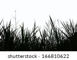 Grass Silhouette On A White...