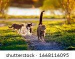 Three Cats Run Along A Green...
