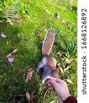 Garden Botanical Park Squirrel...