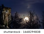 The Horned Owl Sits On A Branc...