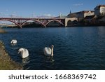 Swans In Maribor  A Town On...