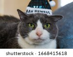 Small photo of Black and white cat wearing a hat that says Bah Humbug