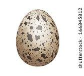 Quail egg isolated  Quail Egg Clip Art