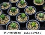 cactus beautiful plant summer...   Shutterstock . vector #1668639658