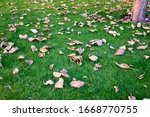 Dried Tree Leaves On A Green...