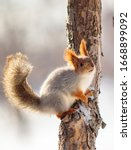 Squirrel In The Winter Forest...