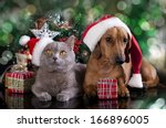 Stock photo british kitten and dog dachshund 166896005
