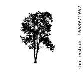 tree silhouettes on white...   Shutterstock .eps vector #1668971962