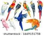 Set Of Parrots  Corella  Macaw  ...