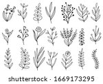 collection forest fern... | Shutterstock .eps vector #1669173295