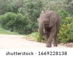 Elephant baby alone in South Africa Lamdscape