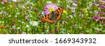 Panorama Flower Meadow With...