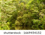 Typical Amazonian Vegetation In ...