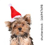 A Cute Yorkshire Terrier On A...